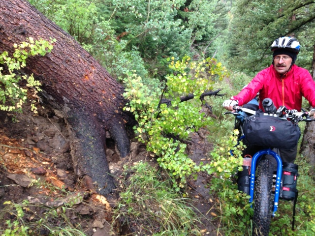 Large dead tree that slid down the slope onto the trail.