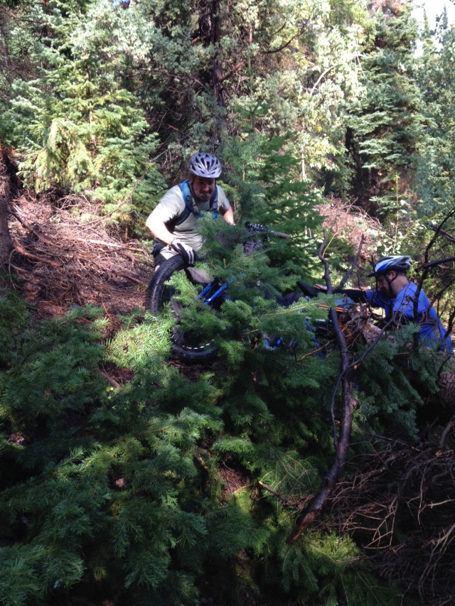 Dragging the bikes up and around another downed pine tree.
