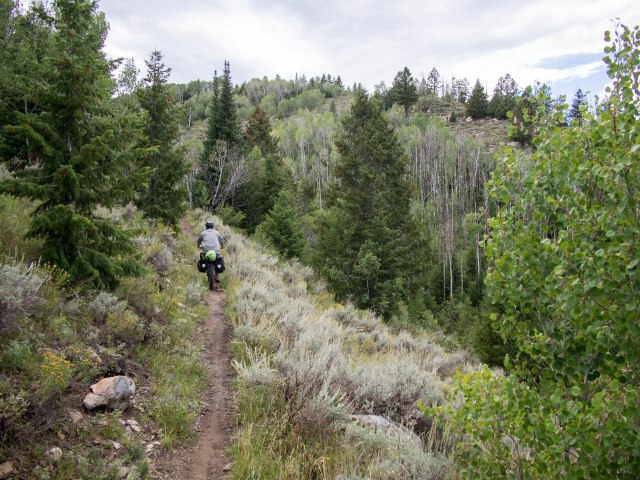 An open sagebrush section.