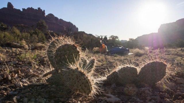 Sunrise in the desert.